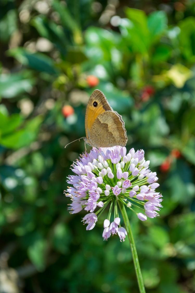 A butterfly enjoying the sun sitting on a flower.