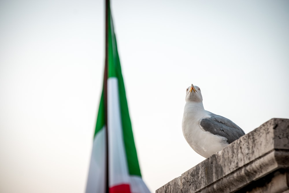 white and black bird on brown concrete fence during daytime