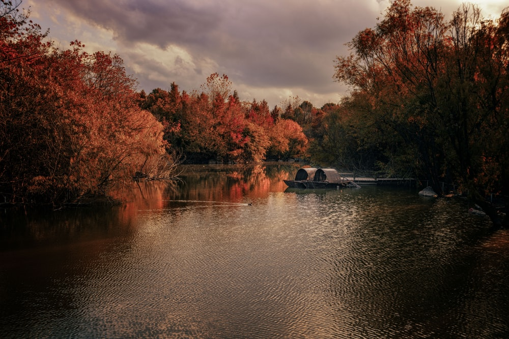 red and brown trees beside river during daytime
