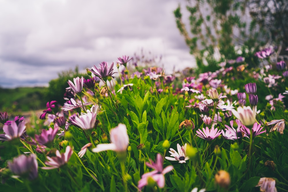 white and purple flowers on green grass field
