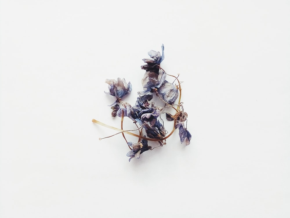 white and purple flower on white surface