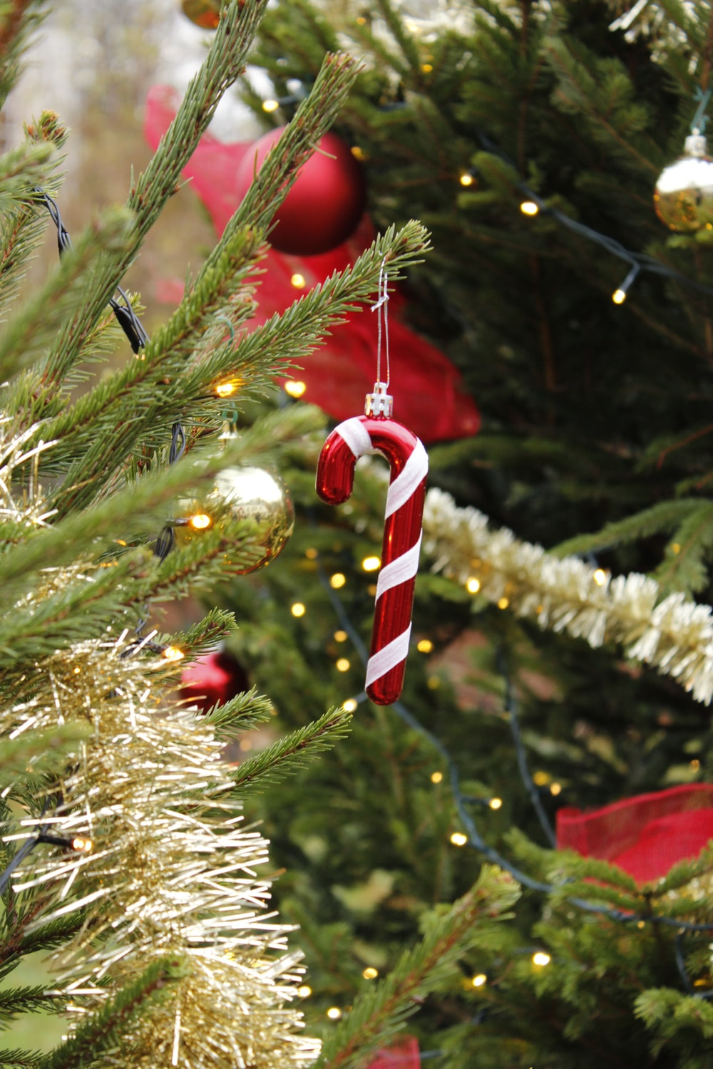 red and white candy cane on brown tree