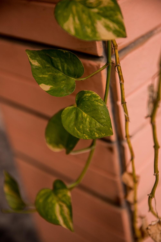 green leaves on brown stem
