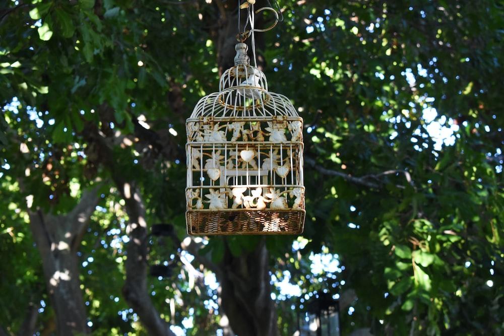 brown bird cage hanging on tree during daytime