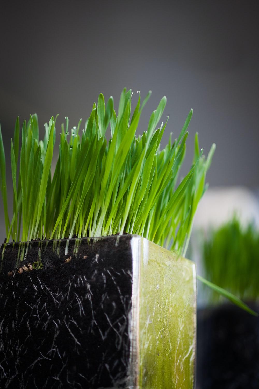 green grass on black and white concrete pot