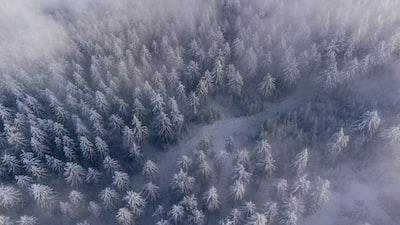 Drone Shot of some snowy Trees IG: @pj_visual