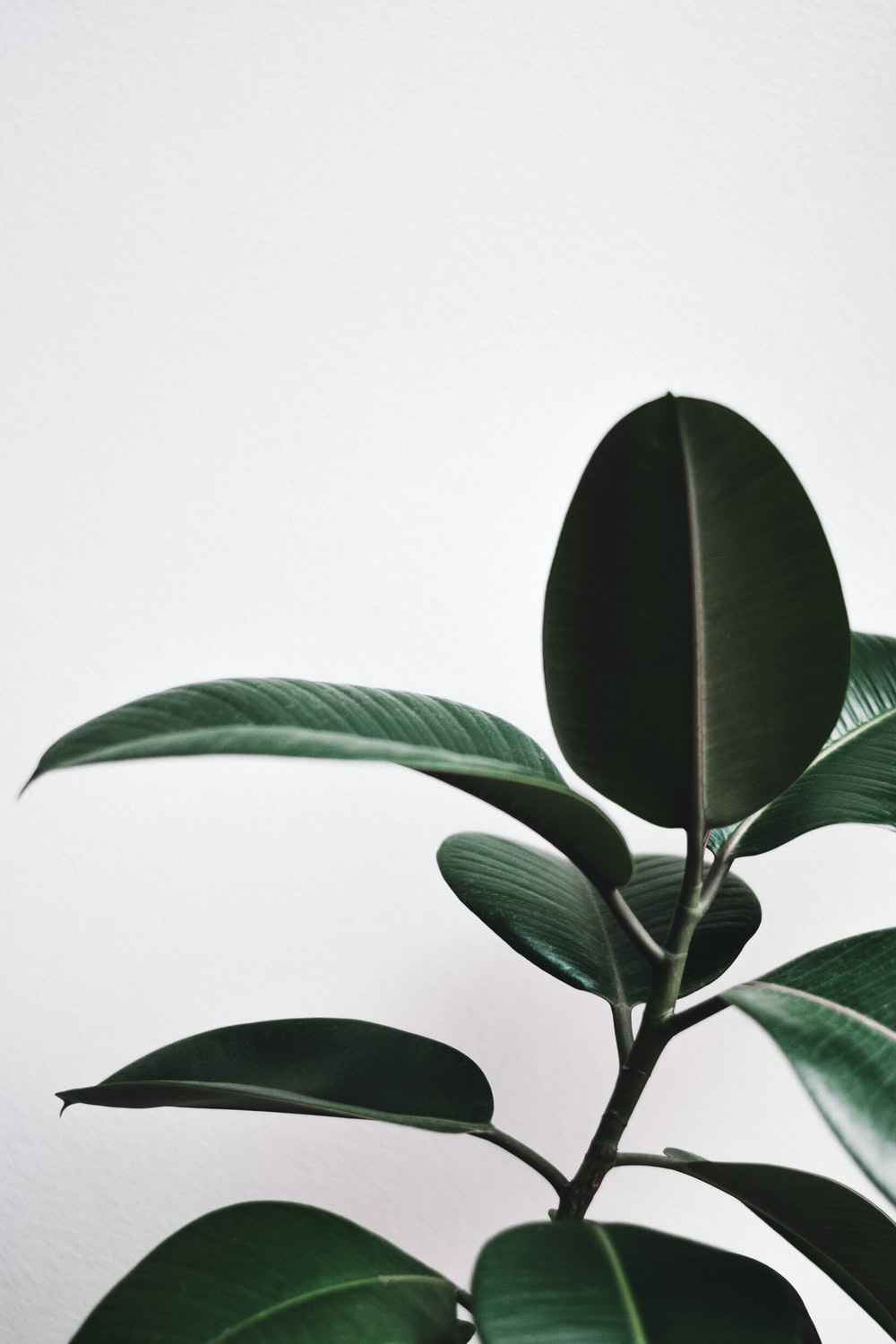 green leaf plant in white background
