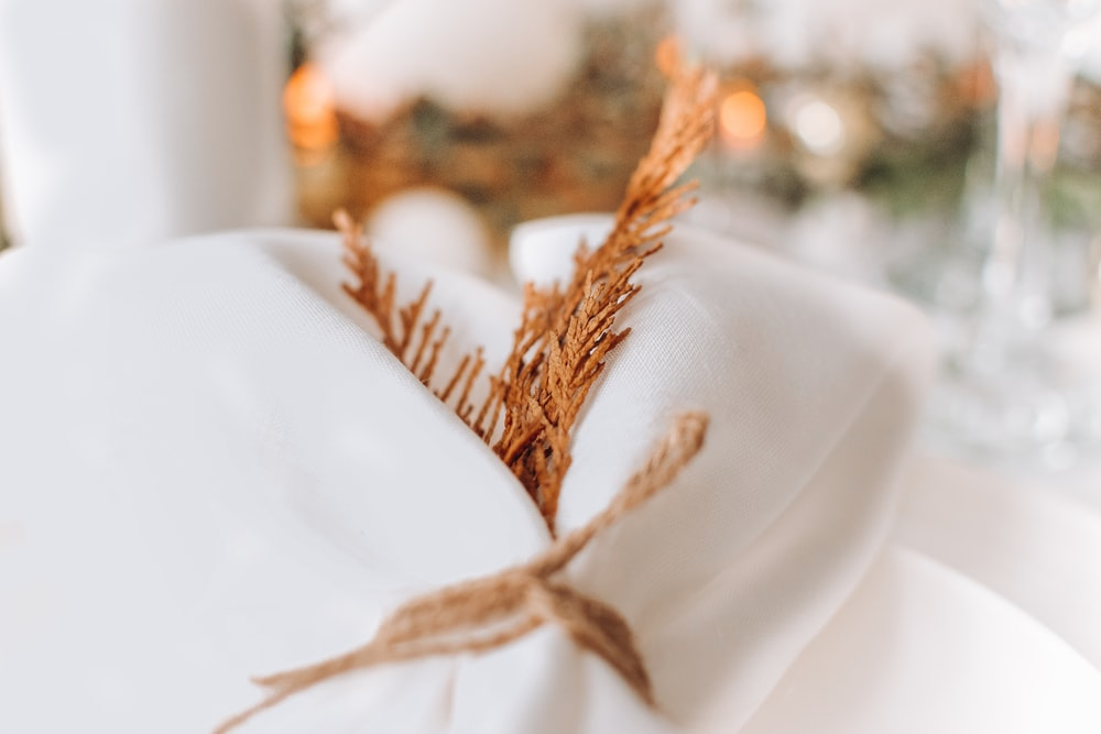 brown dried plant on white textile
