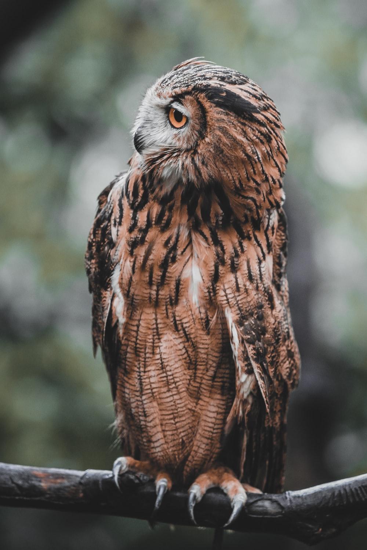brown and white owl in tilt shift lens