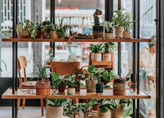 green potted plants on brown wooden table
