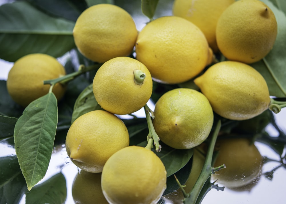 yellow citrus fruit on green leaves