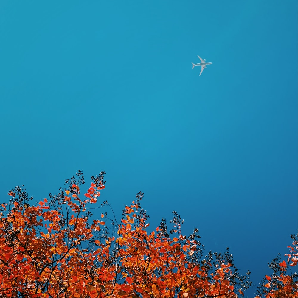 white and red flowers under blue sky during daytime