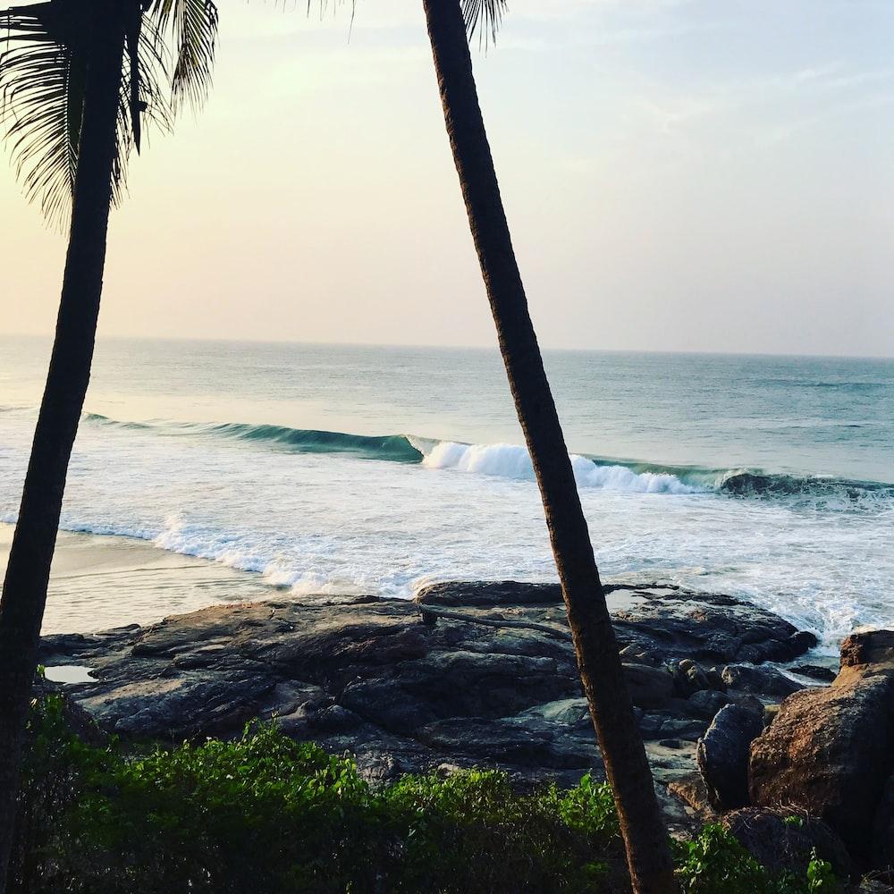 palm tree near sea during daytime