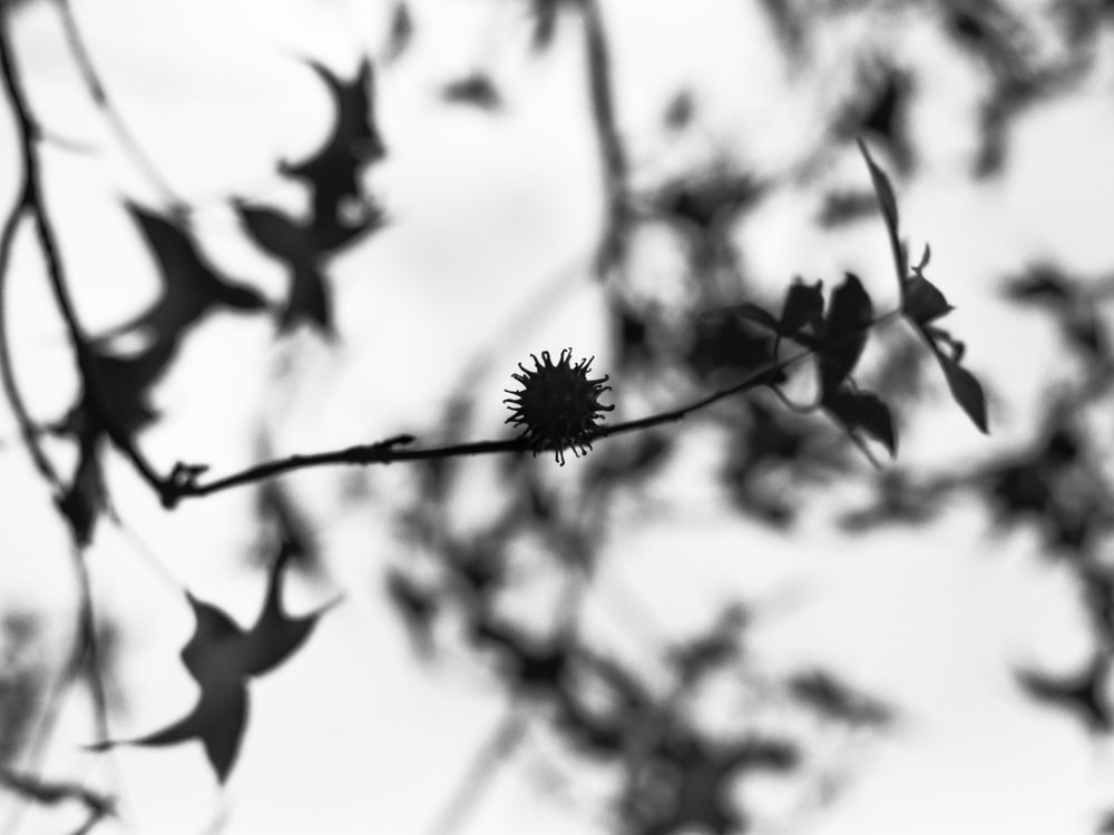 grayscale photo of flower during daytime