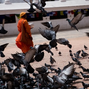 flock of birds on gray concrete floor