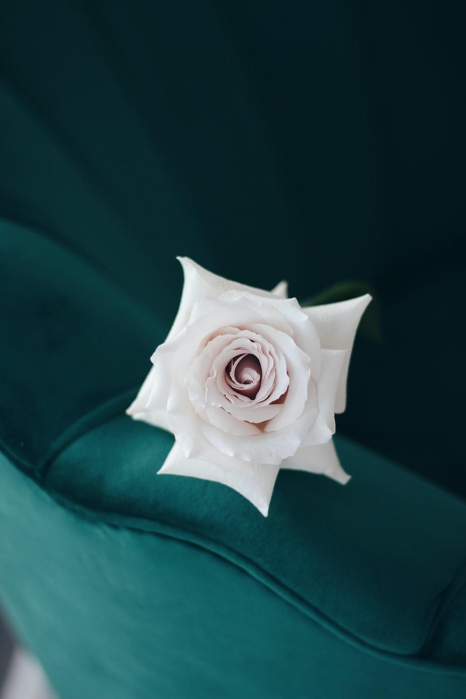 white rose on green textile