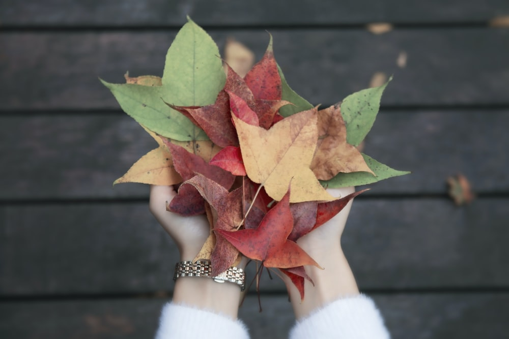 red and green leaves on persons hand