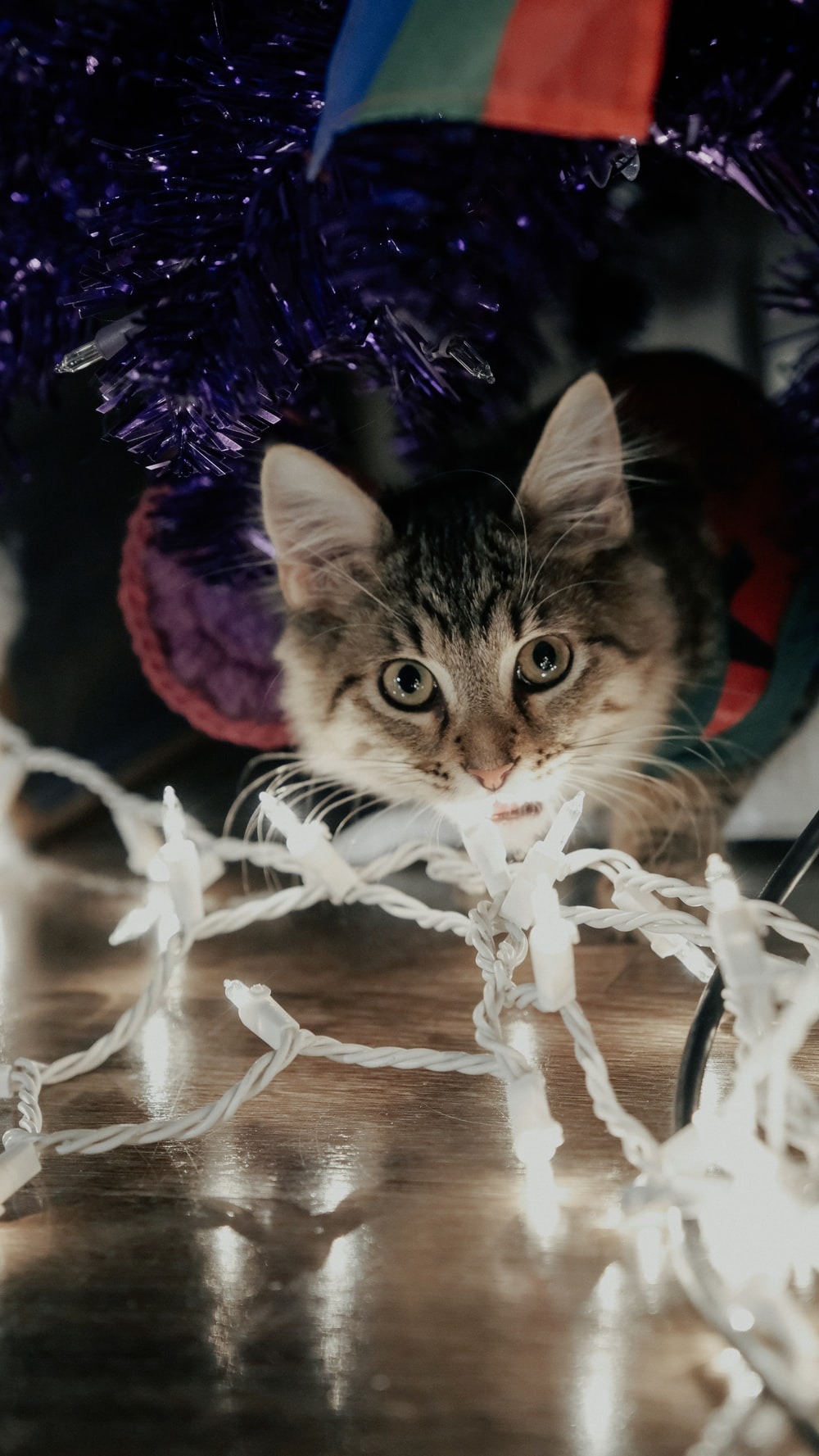 silver tabby cat on white string lights