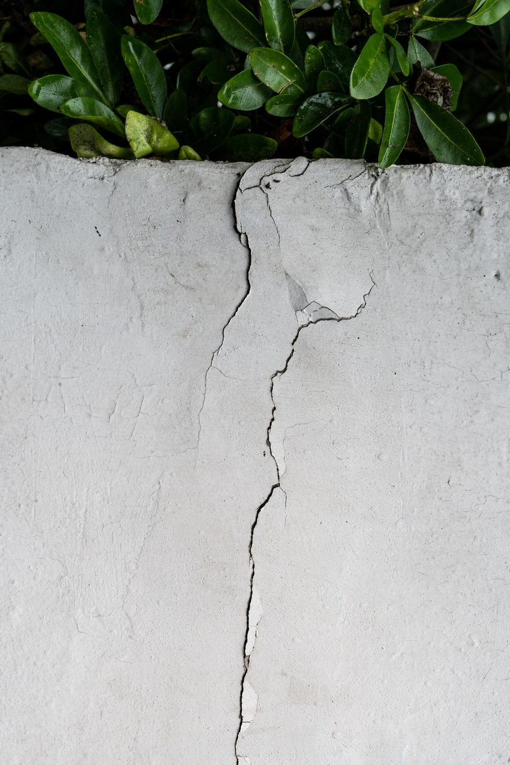 green leaves on white concrete wall