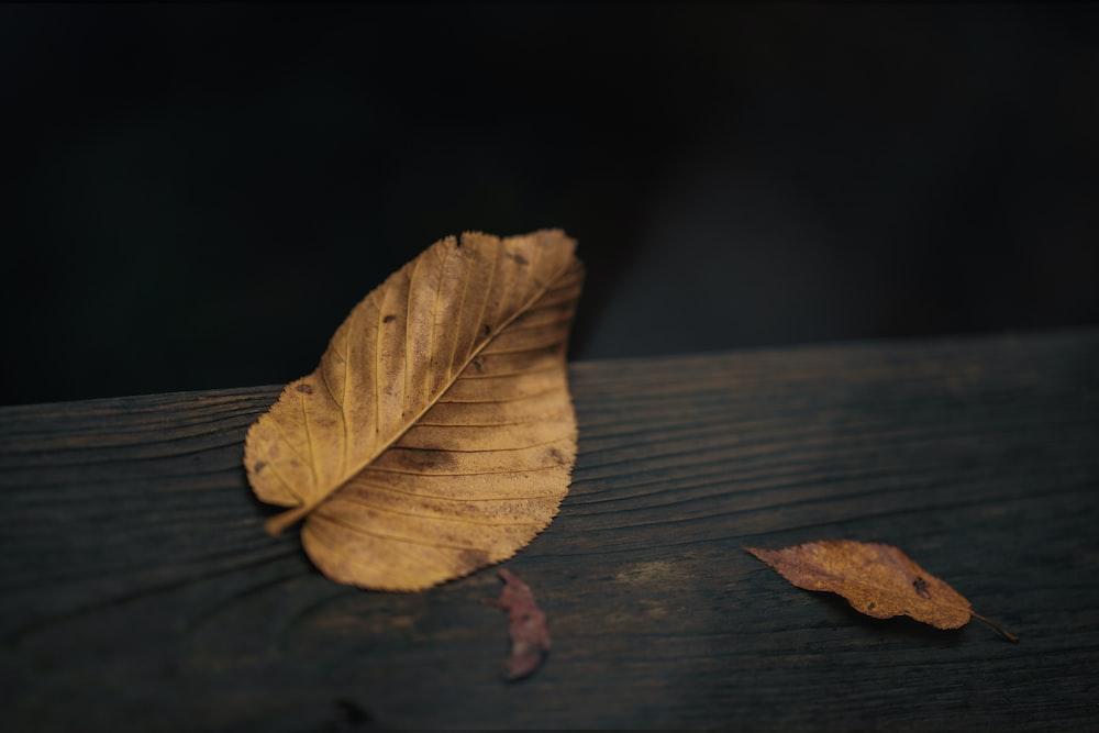 brown leaf on brown wooden table