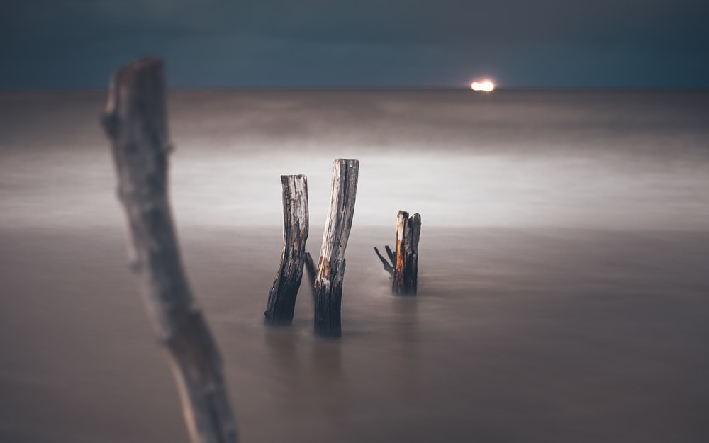 brown wooden sticks on brown sand during sunset