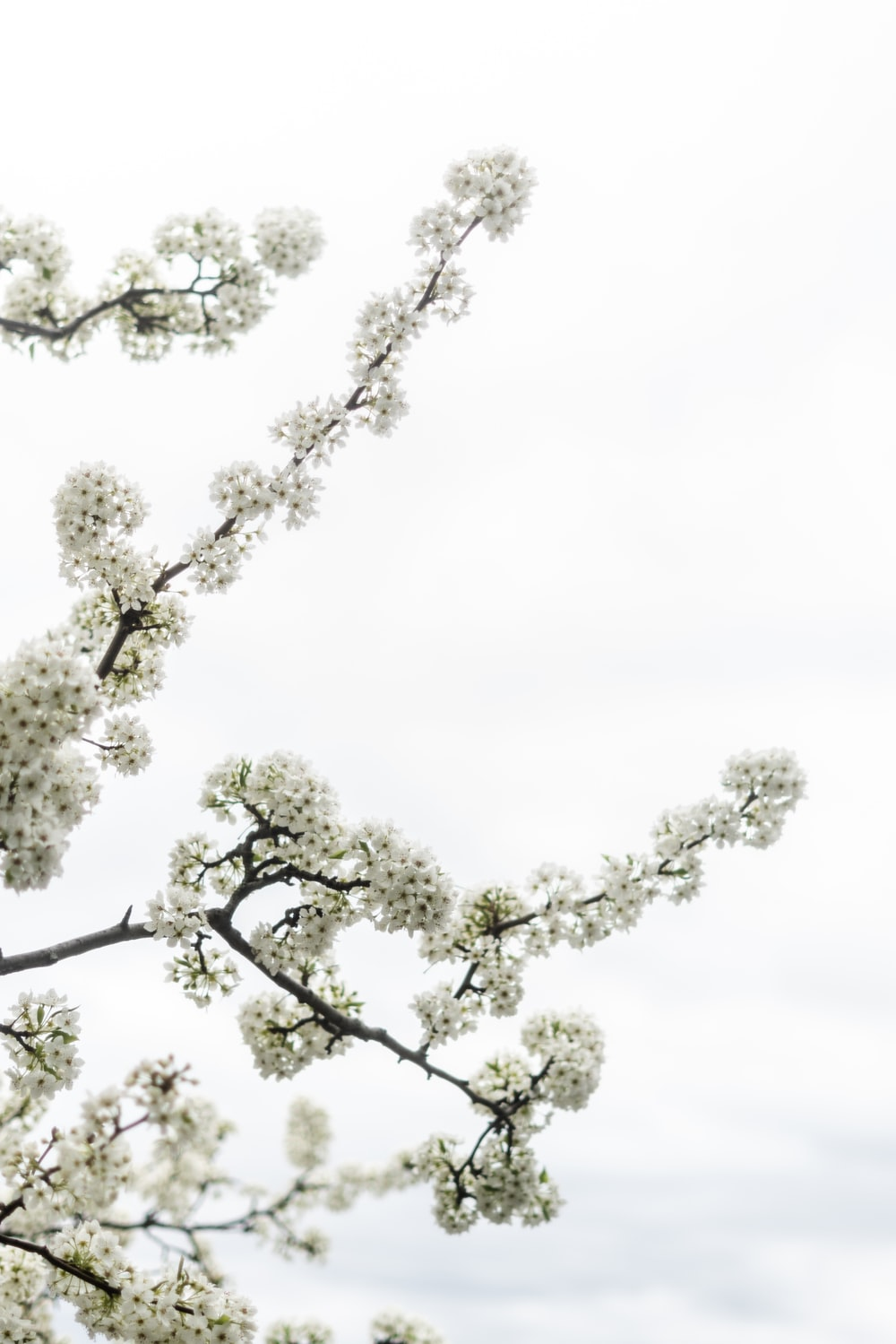 green tree under white sky during daytime