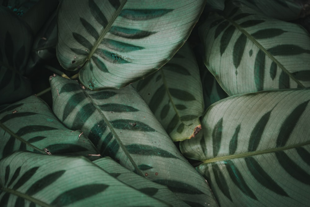 green and white leaves in close up photography