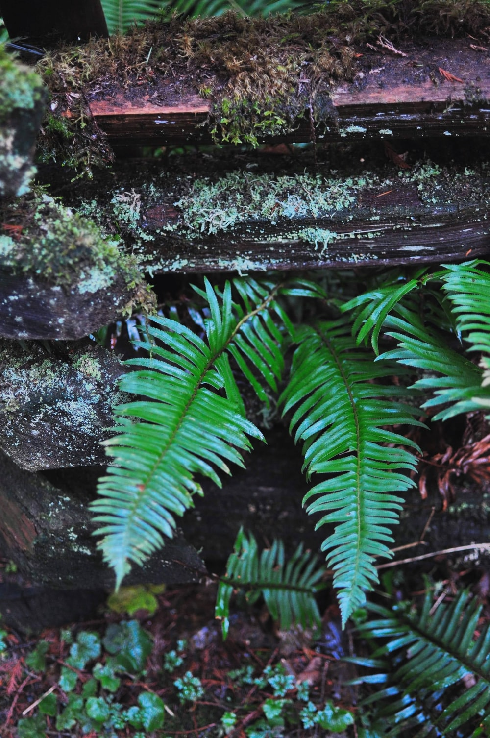 green fern plant on brown tree trunk