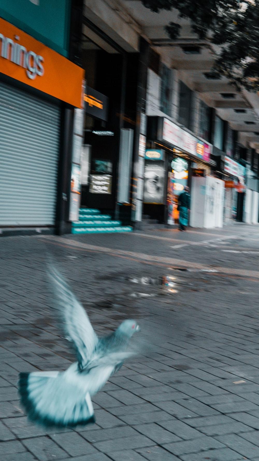 white bird on gray concrete road during daytime