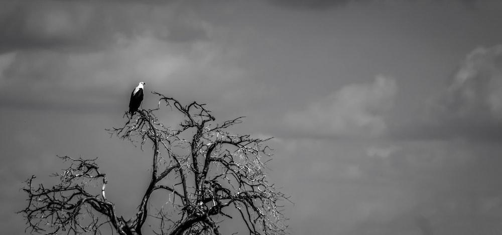 grayscale photo of bird on bare tree