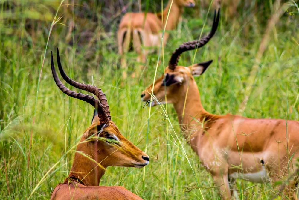 brown deer on green grass during daytime