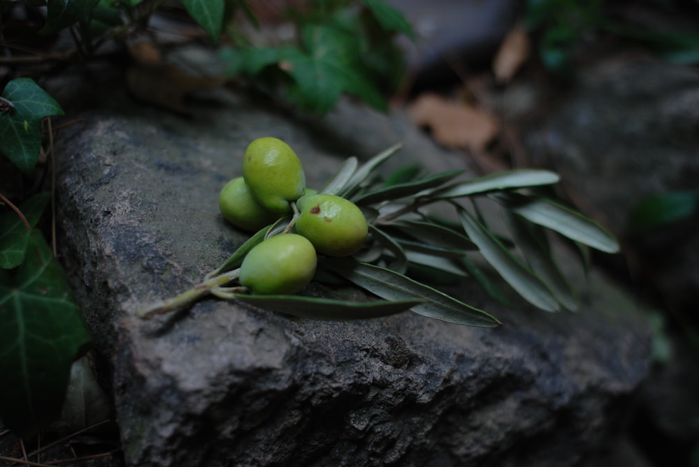 green round fruit on black surface