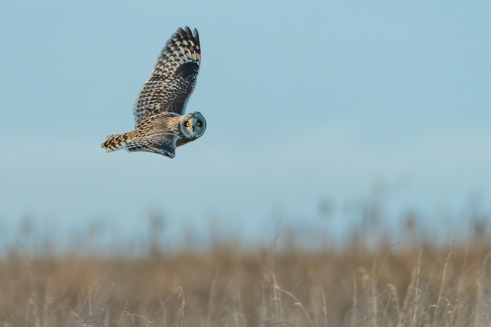 brown and white owl flying during daytime