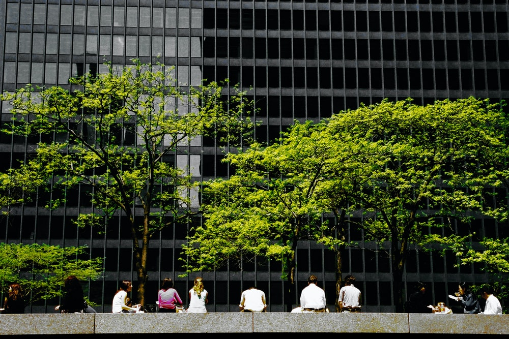 people sitting on bench near green trees during daytime