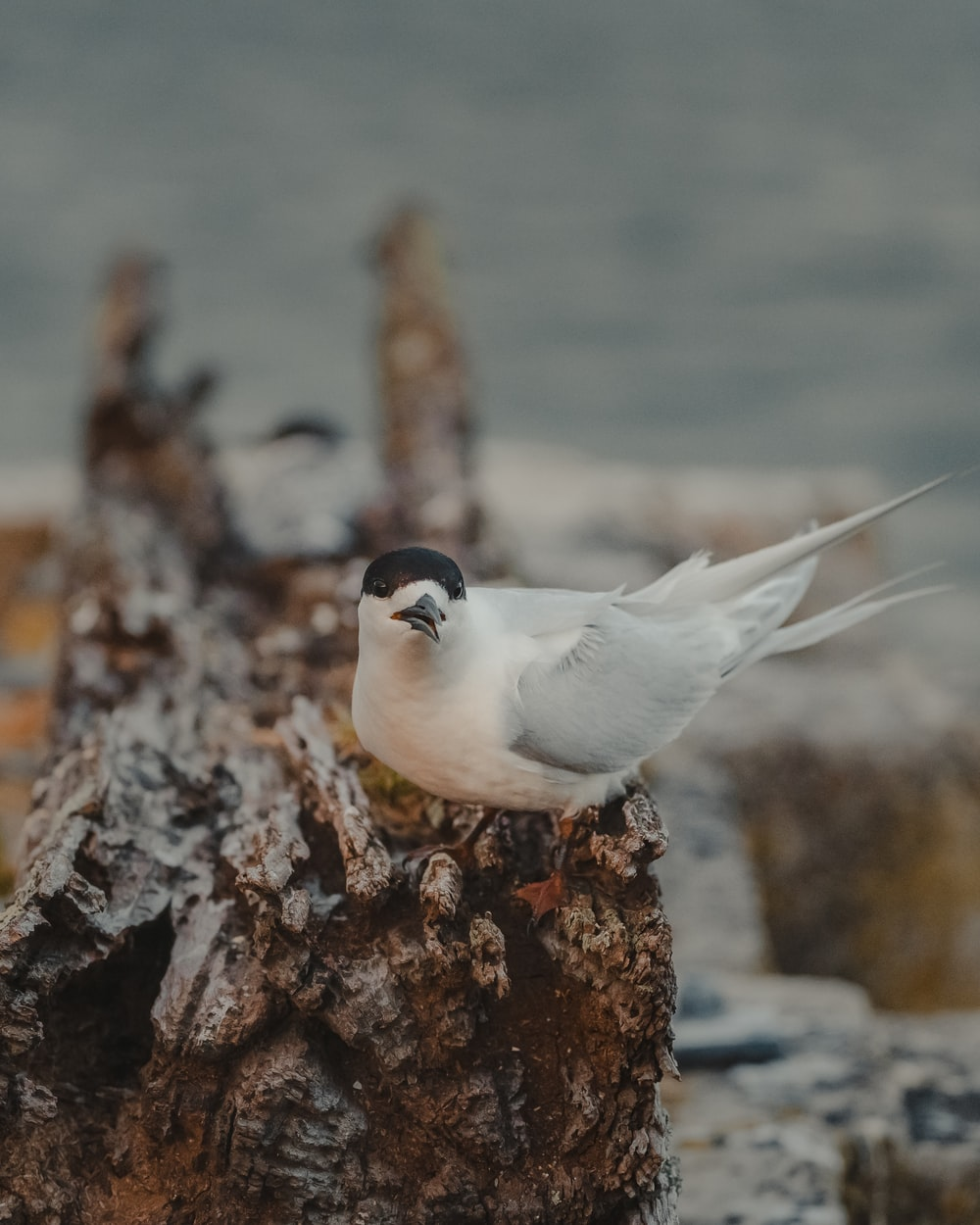 white and black bird on brown rock