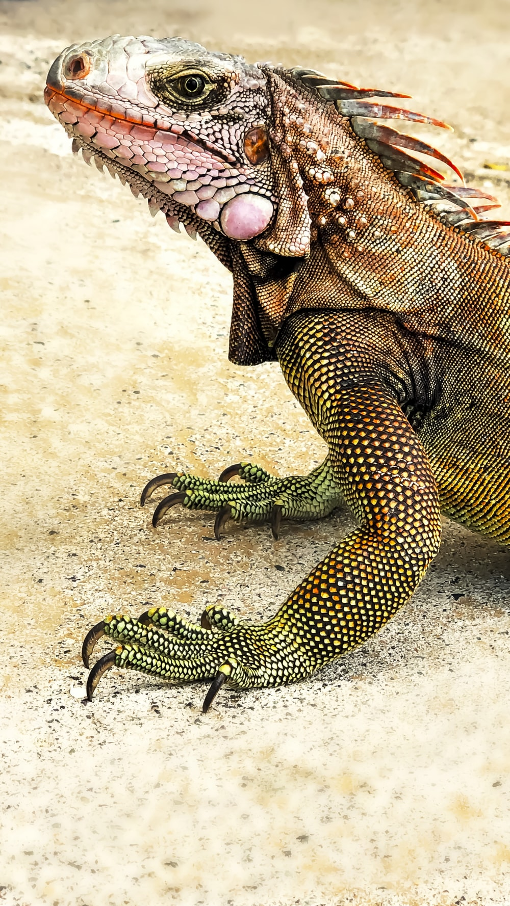 green and black reptile on white sand