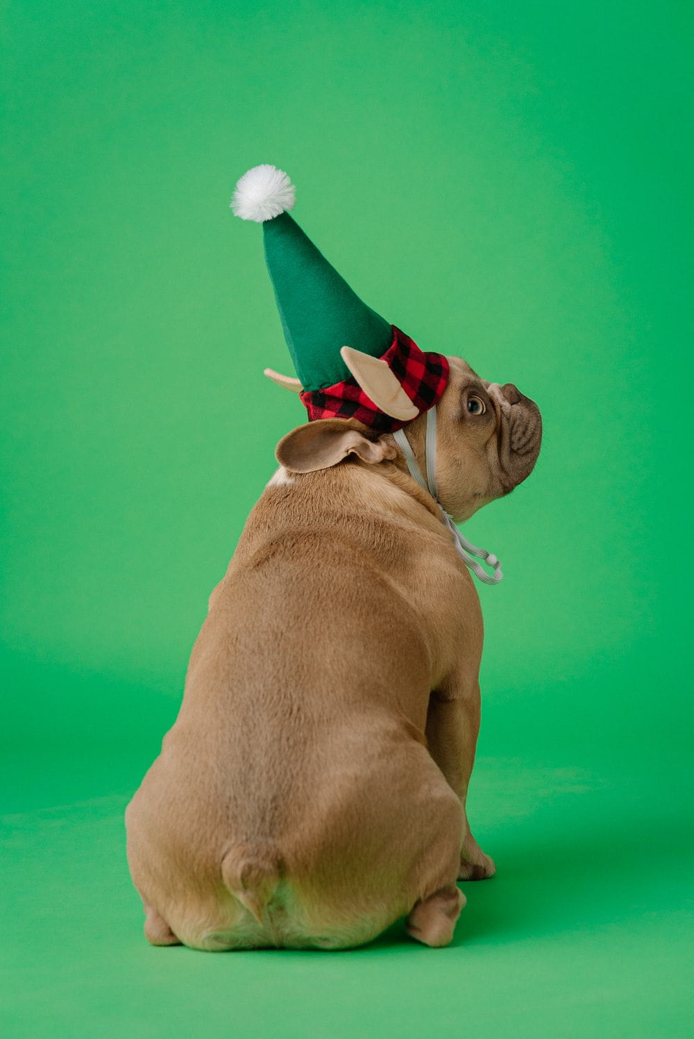 brown short coated dog wearing red and white santa hat