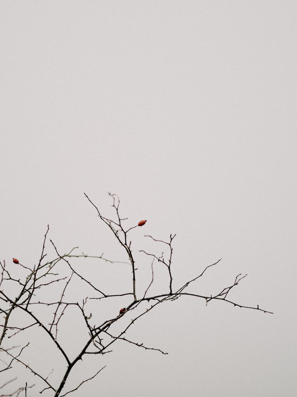 red bird on brown tree branch