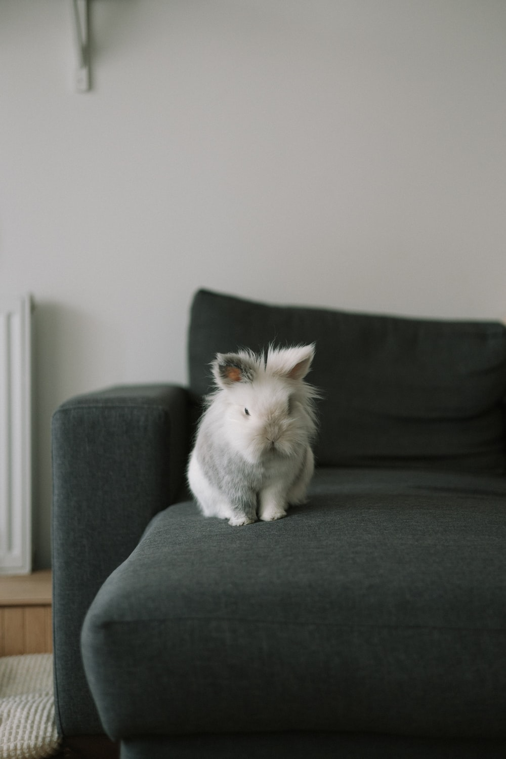 white rabbit on gray sofa