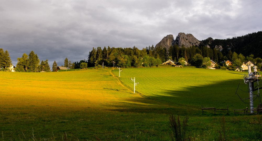 green grass field with trees and mountain in distance