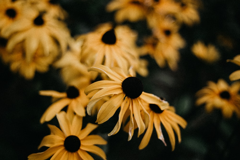 yellow and black sunflower in close up photography