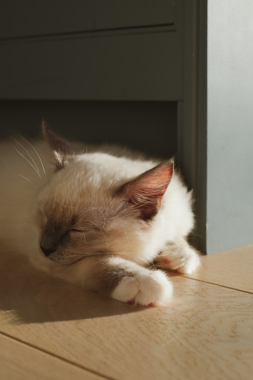 white and brown cat on brown floor