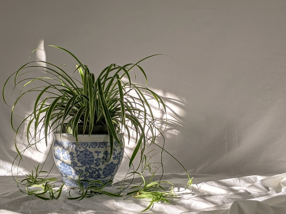 green plant on blue and white floral ceramic pot