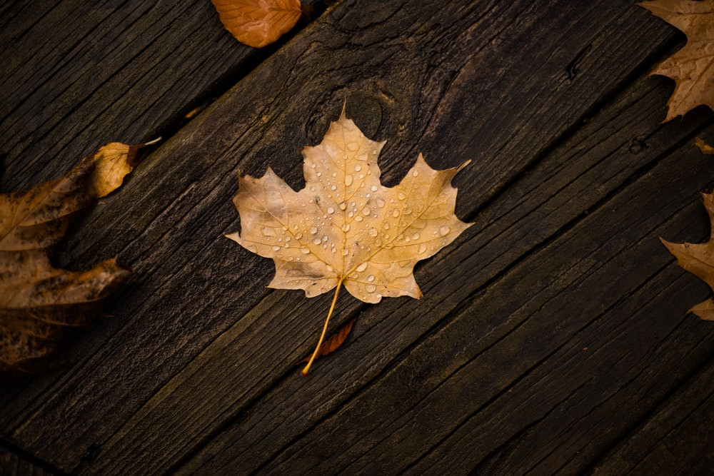 brown maple leaf on brown wooden surface