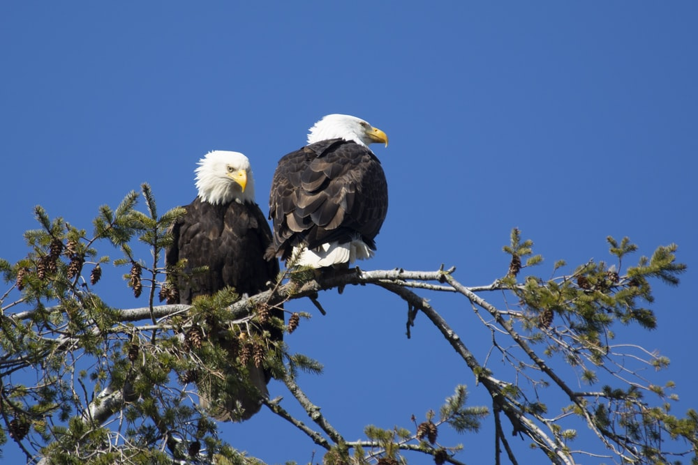 bald eagle on tree branch during daytime
