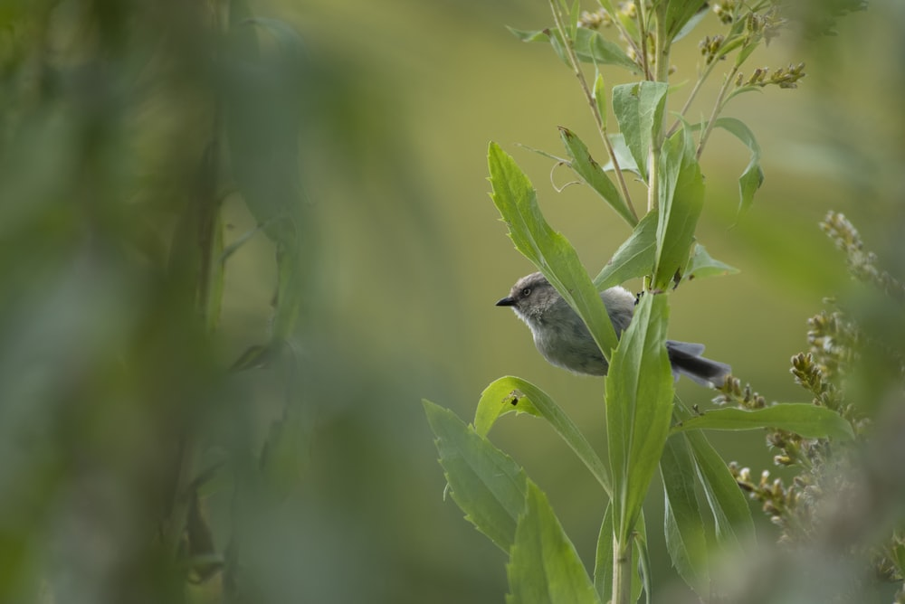 gray and white bird on green plant