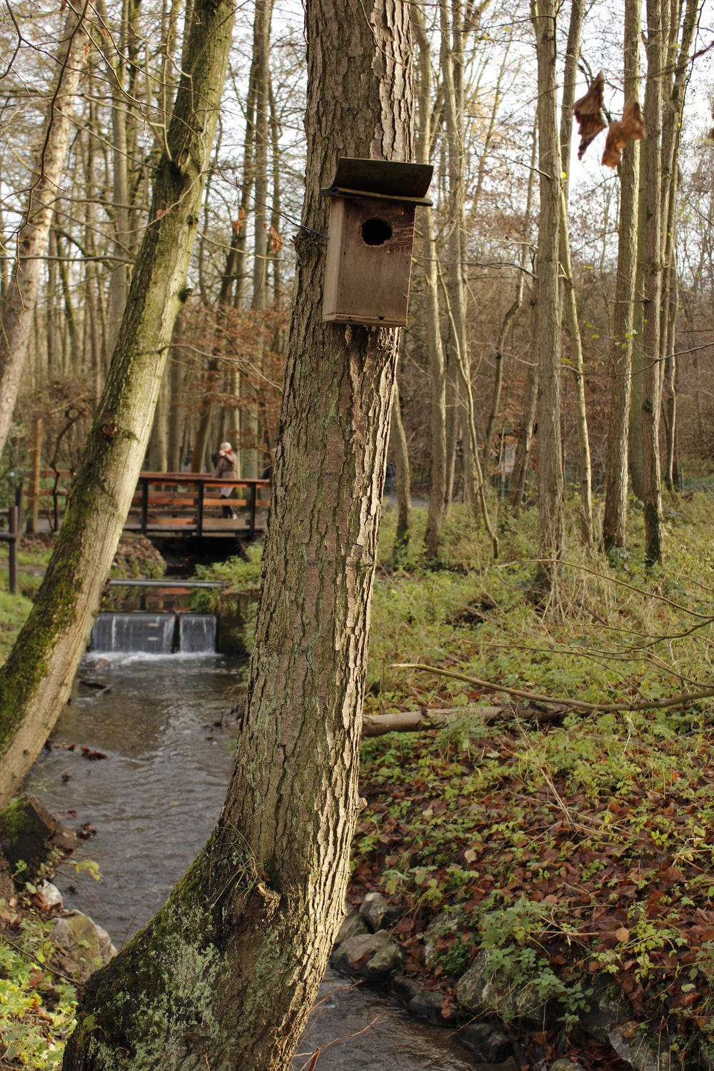 brown wooden birdhouse on brown tree trunk near river during daytime