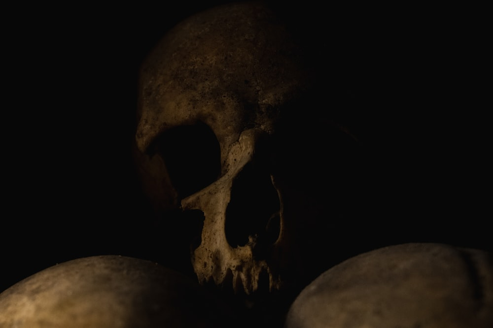 human skull with black background