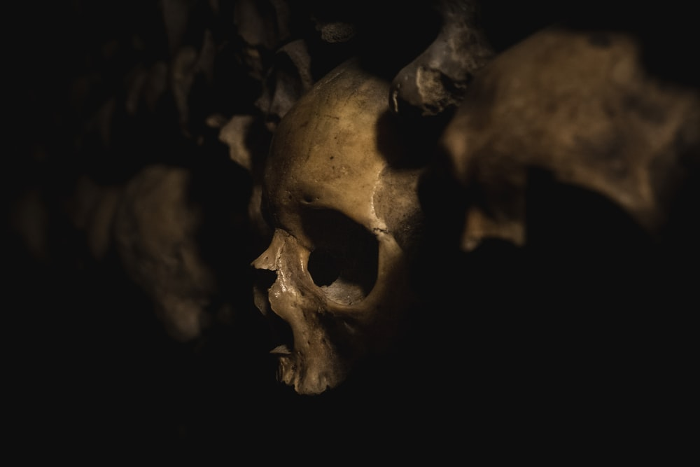 brown skull with black background