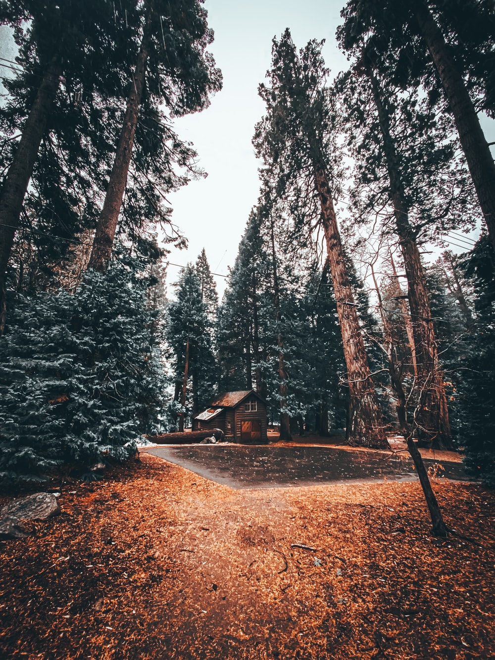 brown wooden house in the middle of the forest during daytime